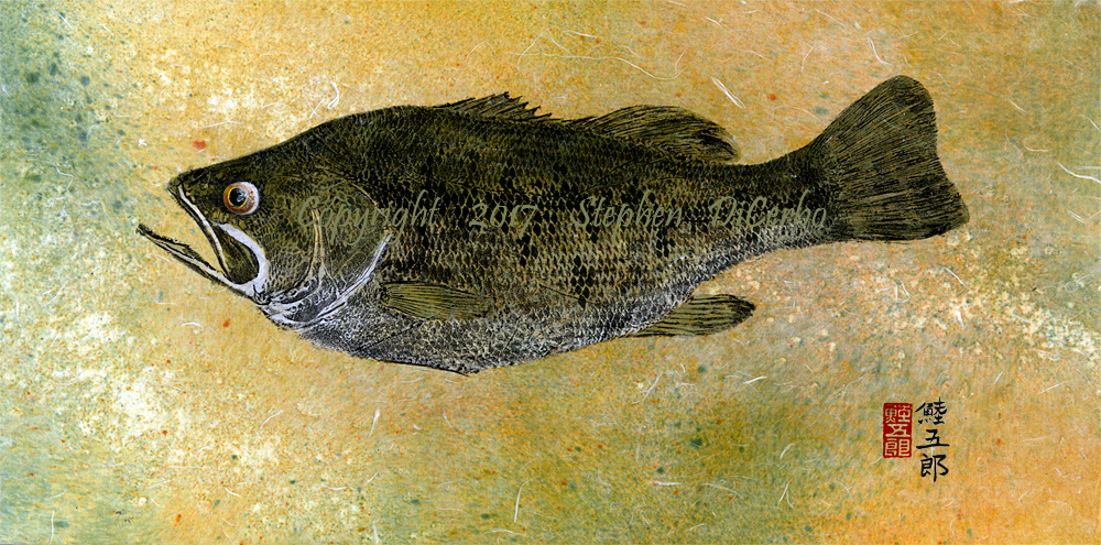 Champlain-Largemouth-Bass-9-lo-res-and-scarred-1000-pix