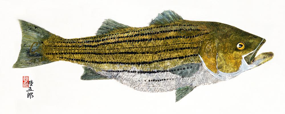 Pleasant-Bay-striper--lo-res-and-scarred-1000-pix