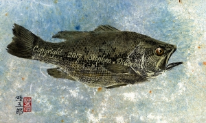 Champlain-Largemouth-1-lo-res-and-scarred-1000-pix