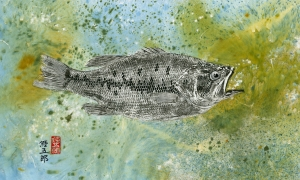 Greyscale-Largemouth-Bass-Direct-print-with-color-wash-background-lo-res-and-scarred-1000-pix
