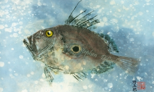 John-Dory-lo-res-and-scarred-1000-pix