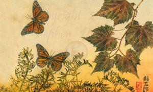 Adirondack-Monarch-Meadow-2-lo-res-and-scarred-1200-pix-e1512165694116