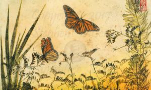 Adirondack-Monarch-Meadow-3-lo-resand-scarred-1200-pix