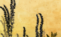 lavendar-dragonfly-lo-res-and-scarred-1000-pix