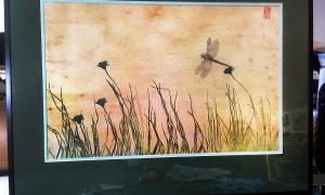 shadow-darner-meadow