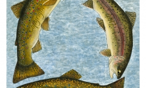 Trout-Trilogy---lo-res-and-scarred-1000-pix