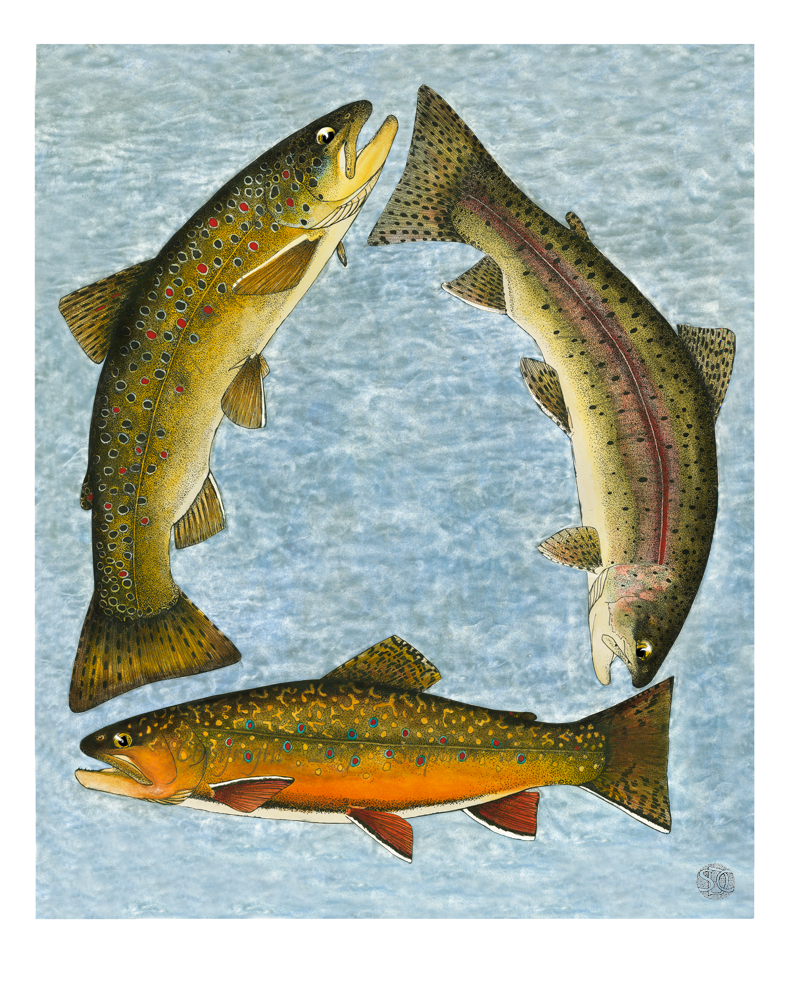 Trout Trilogy 1